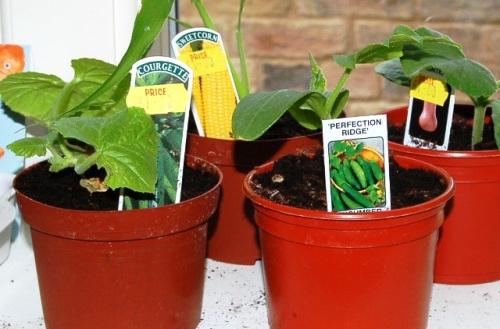 Dawn Isaac plants 002