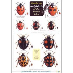ladybird_guide02