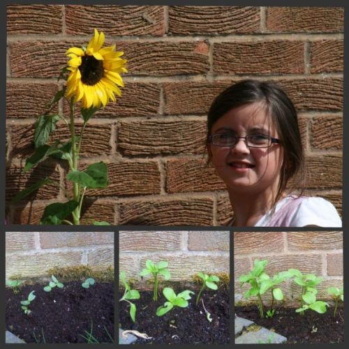 Hannahsunflowercollage