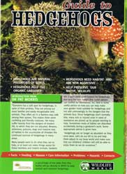 hedgehog_booklet_med