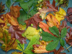 Autumn Leaf Mix