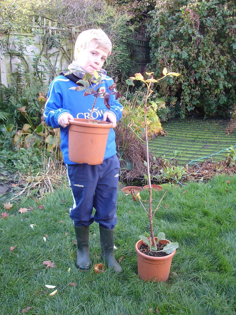 Plant a conker and grow a horse chestnut tree for the for Gardening with children