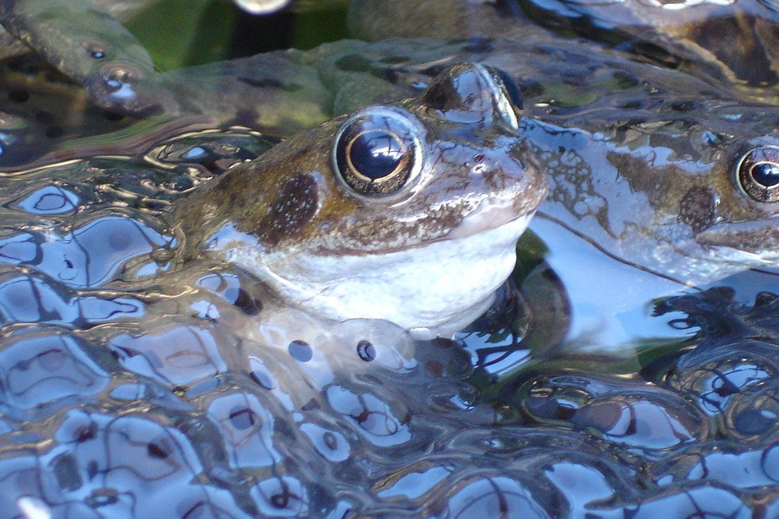 Image result for frogspawn