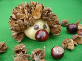 Beech Seed Case Hedgehog