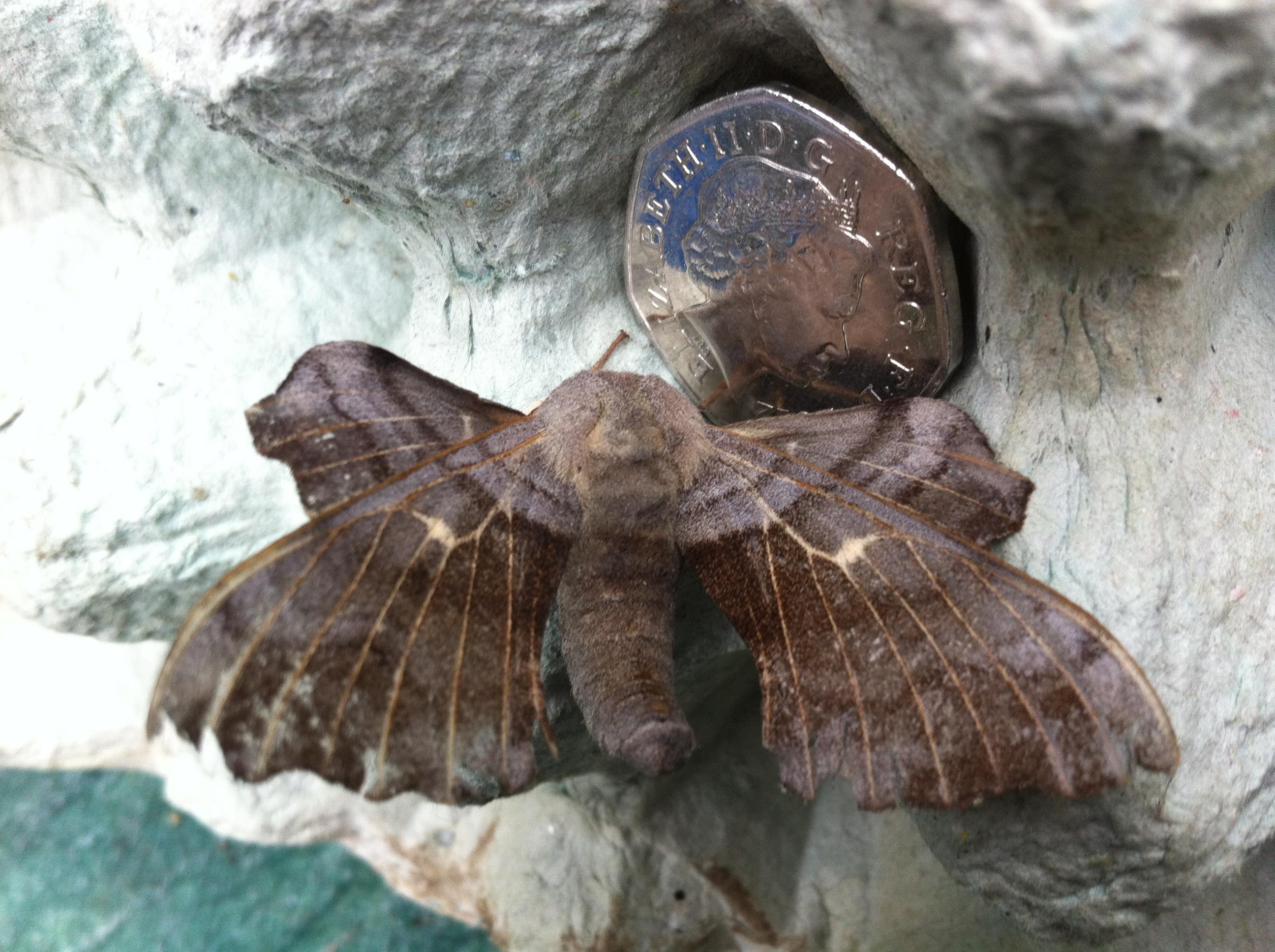 Moth Night - programa para adultos | Radio Pública de Wisconsin